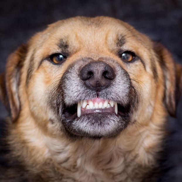 Descubre si tu perro es dominante con estas sencillas pautas