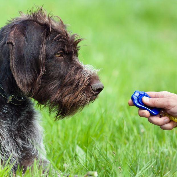 Aprende a utilizar el clicker para entrenar a tu mascota