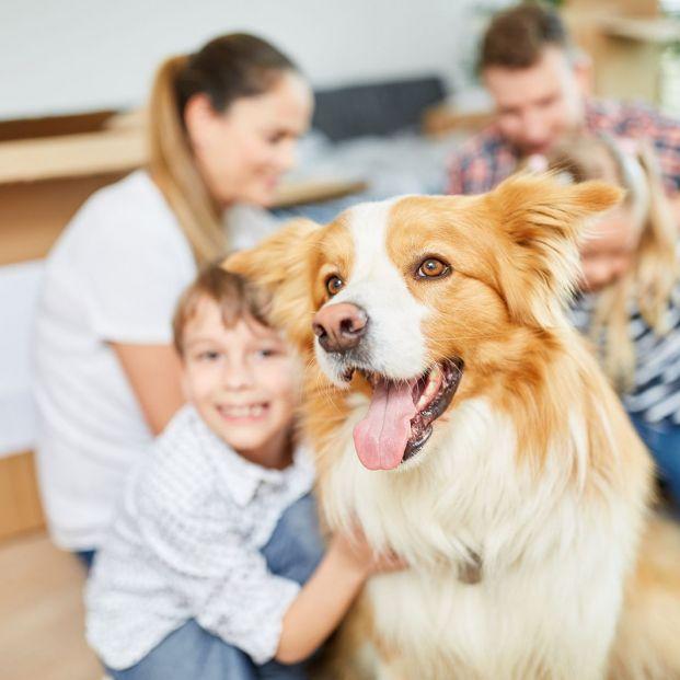 Primeras pautas a seguir con un perro recién adoptado
