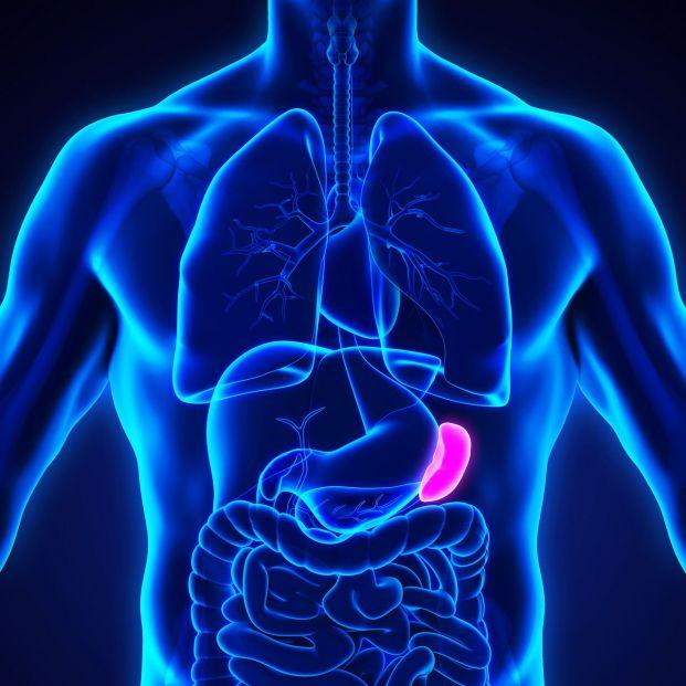 La esplenomegalia o hipertrofia del bazo
