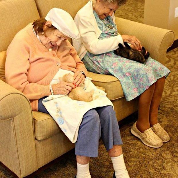 Enfermos con alzhéimer cuidan gatitos