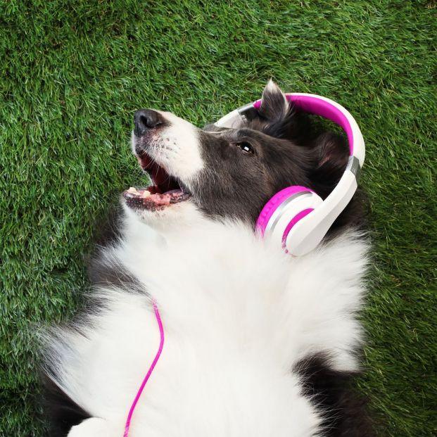 A los perros les gusta escuchar música clásica y reggae
