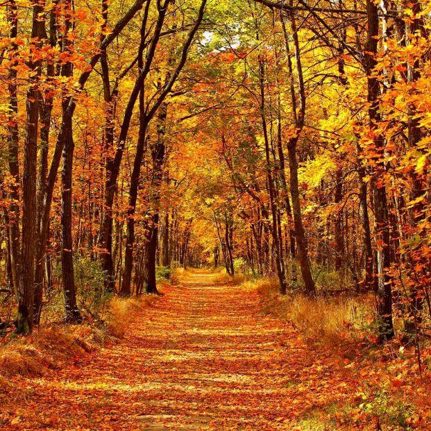 Bosques maravillosos para disfrutar de los colores del otoño