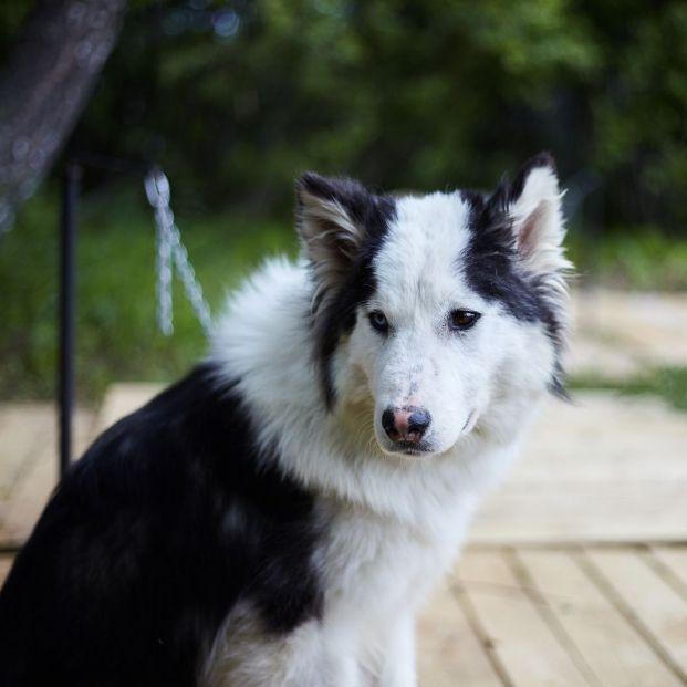Iniciativa para adoptar perros de personas fallecidas