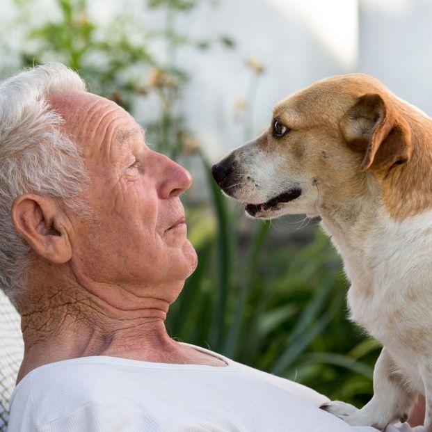 Beneficios de las terapias con animales (Bigstock)