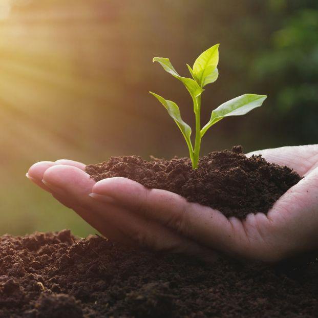 En qué se basa la alimentación sostenible (Bigstock)