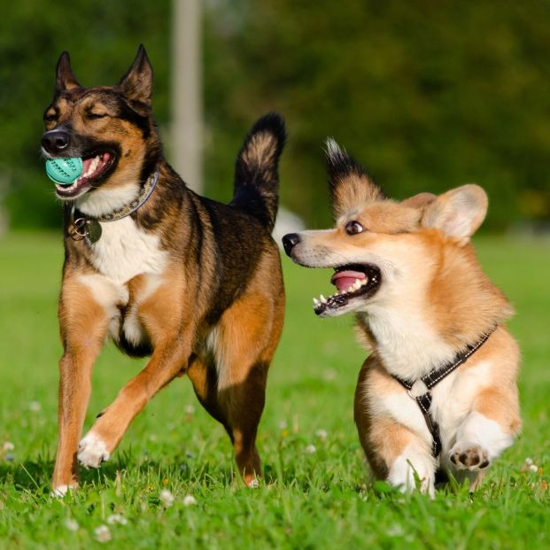 Qué pautas seguir con tu mascota si no se socializa con otros perros