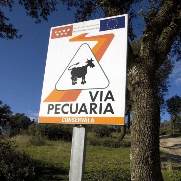 Las vías pecuarias de la Comunidad de Madrid, una excelente opción para hacer senderismo