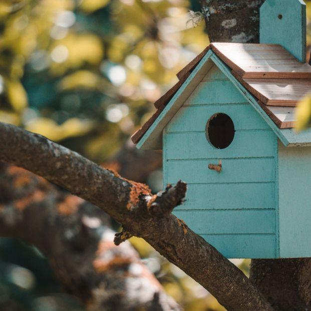 Cómo construir con tus manos una casa para pájaros en tu jardín