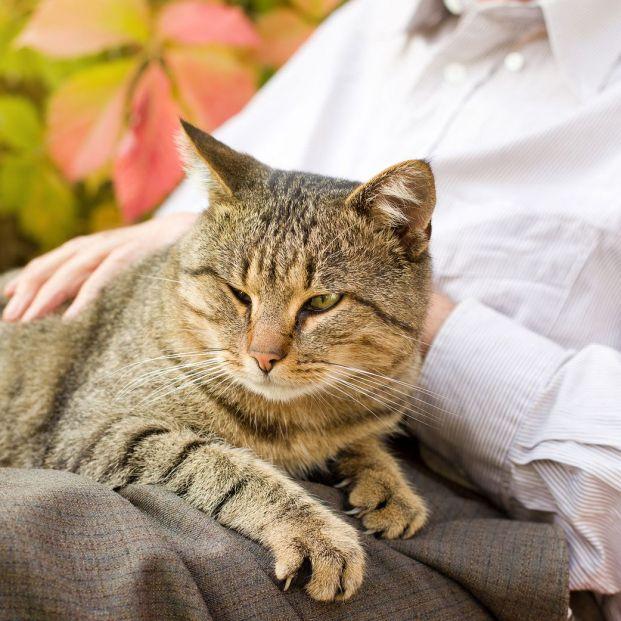 Un misterio sobre los gatos: ¿por qué ronronean?