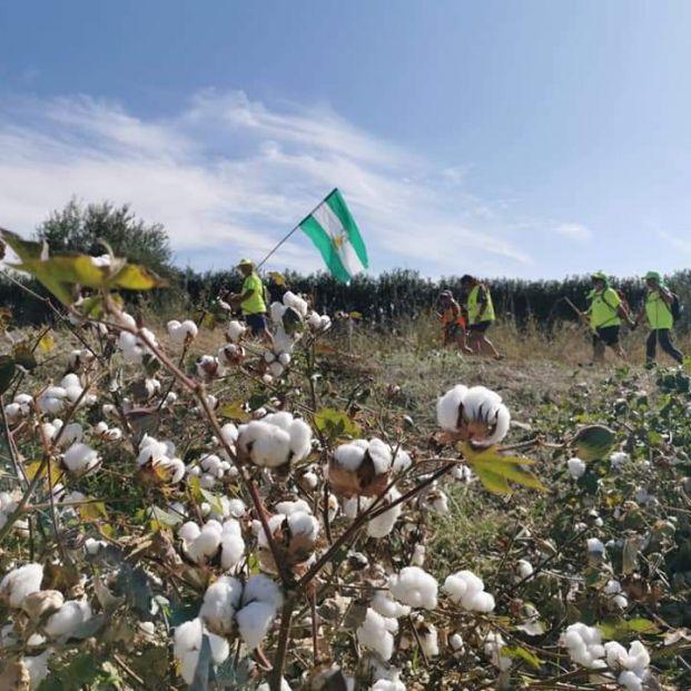 """Los """"Andarines"""" de 2017 - Marcha por las Pensiones Públicas"""