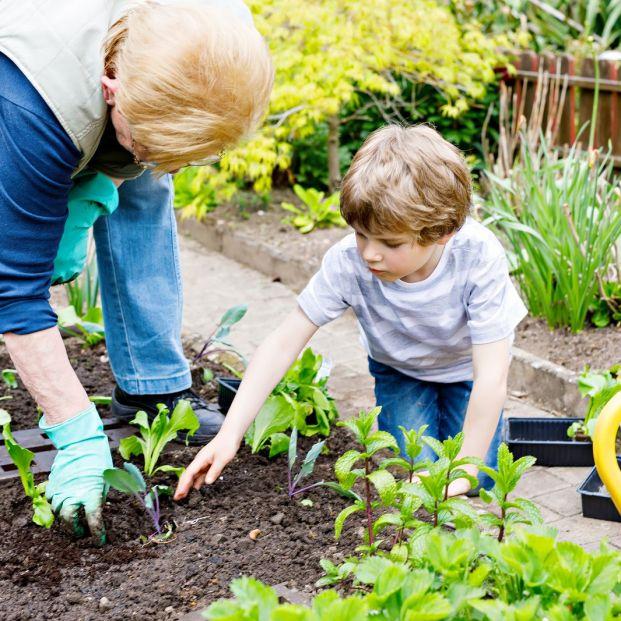 Comprar semillas para plantar (Bigstock)
