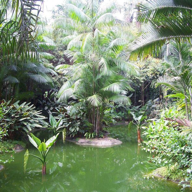 Jardines Botánicos (Bigstock)
