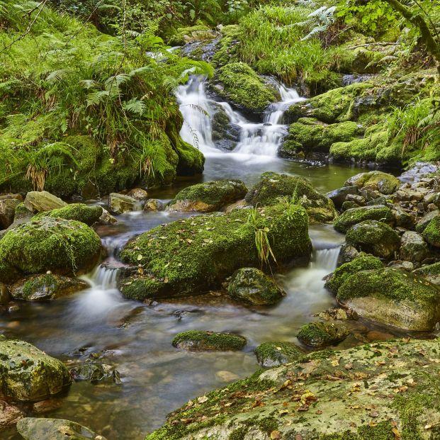 Hayedo de Montegrande (Asturias)