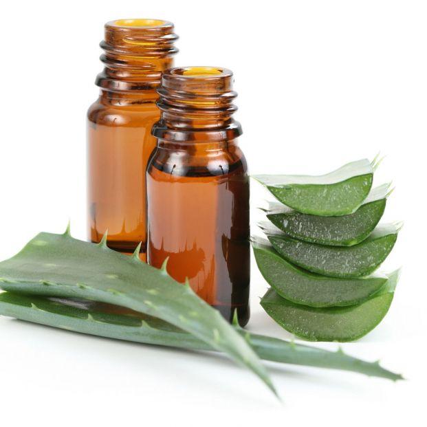 Aloe vera y su gran variedad de propiedades cosméticas (Bigstock)