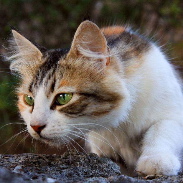 El lenguaje no verbal de tu gato