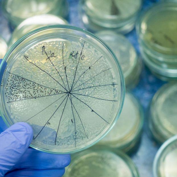 Las esporas de hongos, responsables de los ataques de asma en otoño