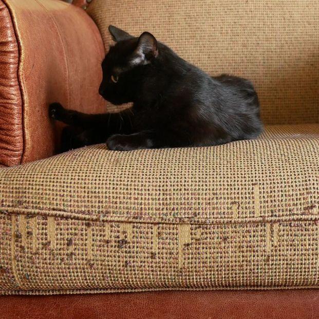 Trucos para evitar que tu gato arañe los muebles de casa