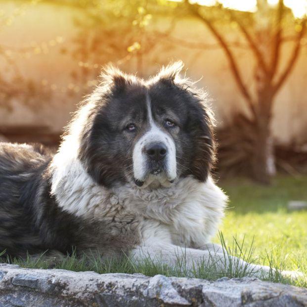 Cómo saber si tu perro padece demencia senil