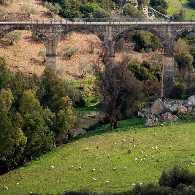 Ruta por la Vía Verde de la Sierra de Cádiz; Viaducto y ganado en la Vía Verde
