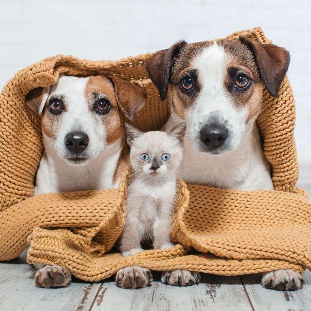 ¿Cómo y por qué tienes que proteger a tu mascota del frío?