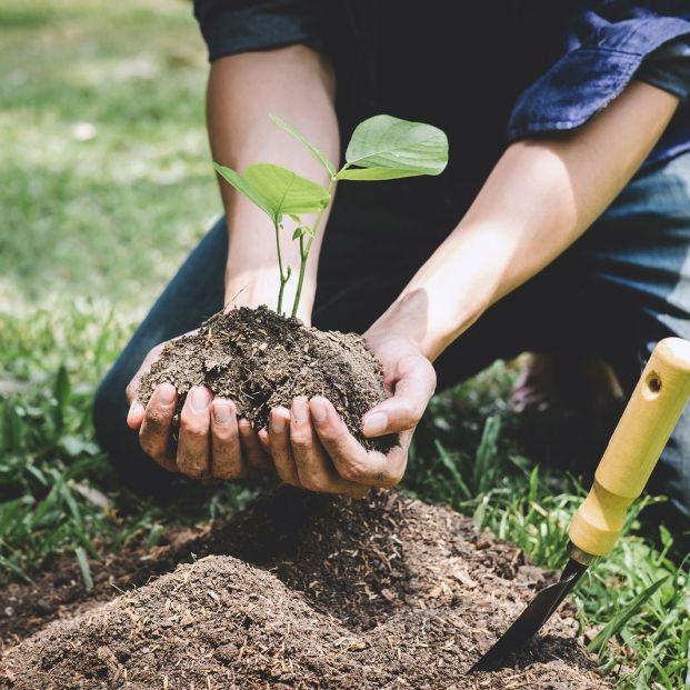 Conoce los proyectos de reforestación que hay en España y cómo participar en uno