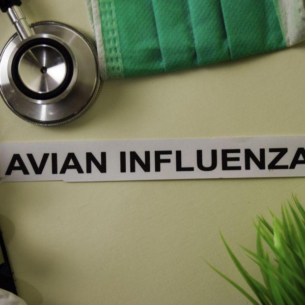 ¿Cuál es la diferencia entre gripe aviar y porcina?