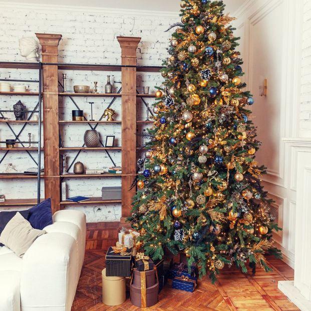 ¿Quieres poner este año con un árbol de Navidad natural? Te decimos dónde comprarlo