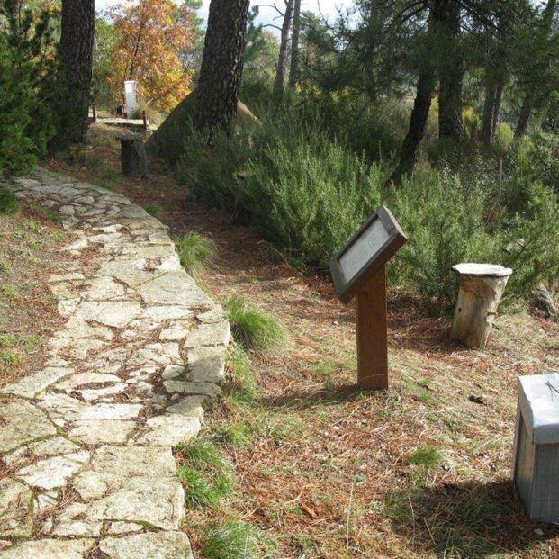 De paseo por el Arboreto de Luis Ceballos conoce sus caminos y la naturaleza que le rodea