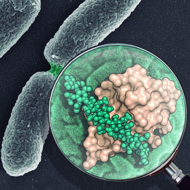 Un fármaco que frene la resistencia a los antibióticos, cada vez más cerca