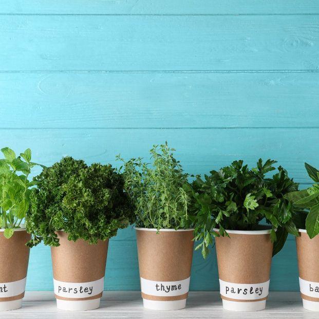 Consejos para conservar las hierbas aromáticas frescas para nuestras creaciones culinarias