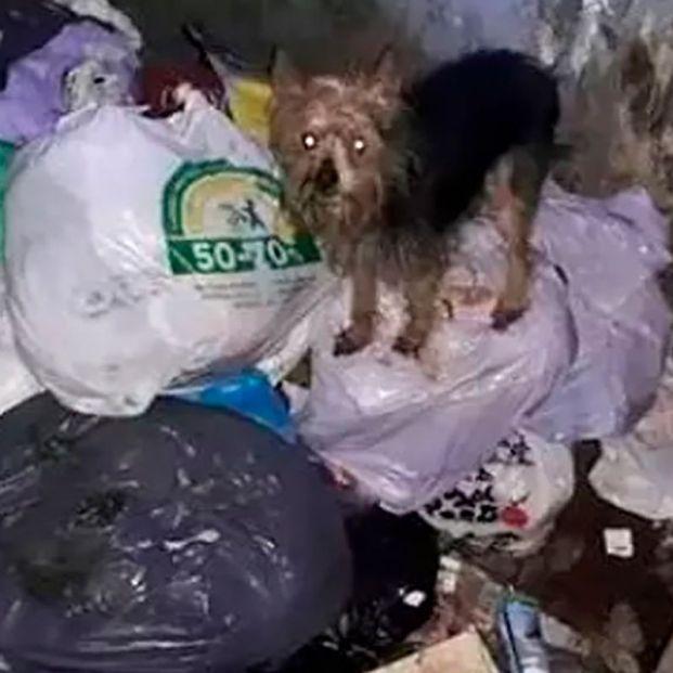 Rescatan con vida a once perros de dos contenedores soterrados en Alicante