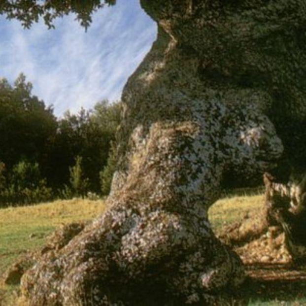 Conoce el lugar mágico en Navarra donde se encuentra la famosa encina de 3 patas