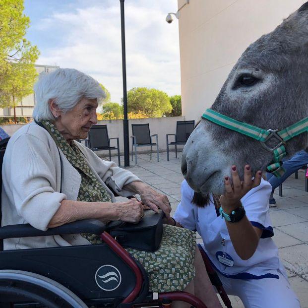 El burro, el animal con el que hacen terapia las personas con alzhéimer de la provincia de Huelva