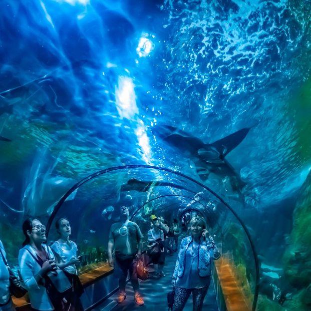 De visita a los acuarios más espectaculares de España: Loro Parque