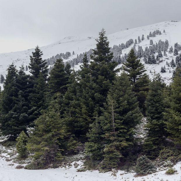 Refranes sobre el invierno y cómo será el año si los tenemos en cuenta