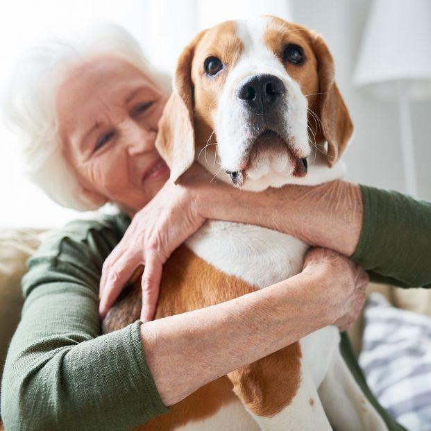 ¿Qué es un perro con pedigree?