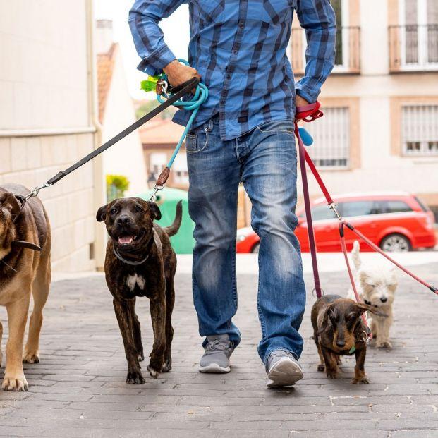¿Necesitas un cuidador para tu perro? ¿En qué debes fijarte para elegir uno?
