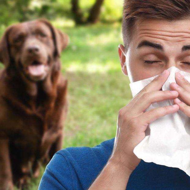 Cómo tratar la alergia a los animales si tienes una mascota