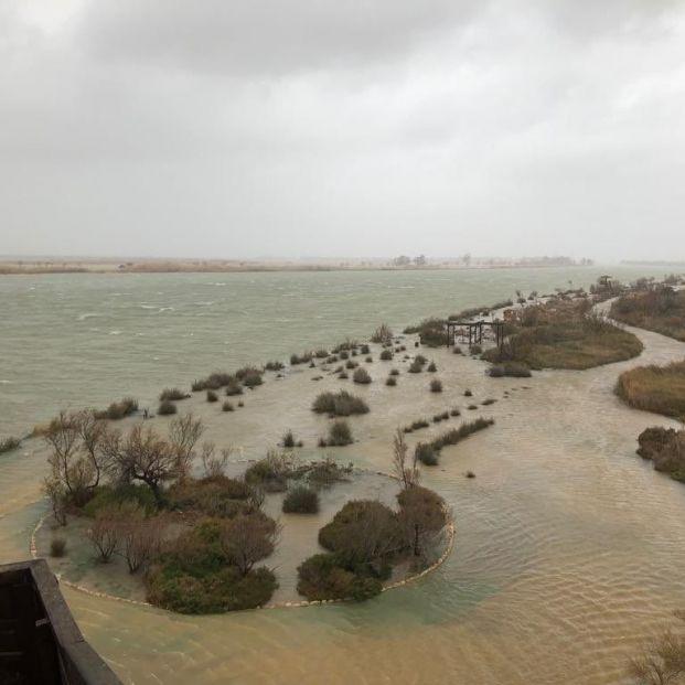 Inundaciones en la zona del delta del Ebro por la borrasca 'Gloria'  (1)