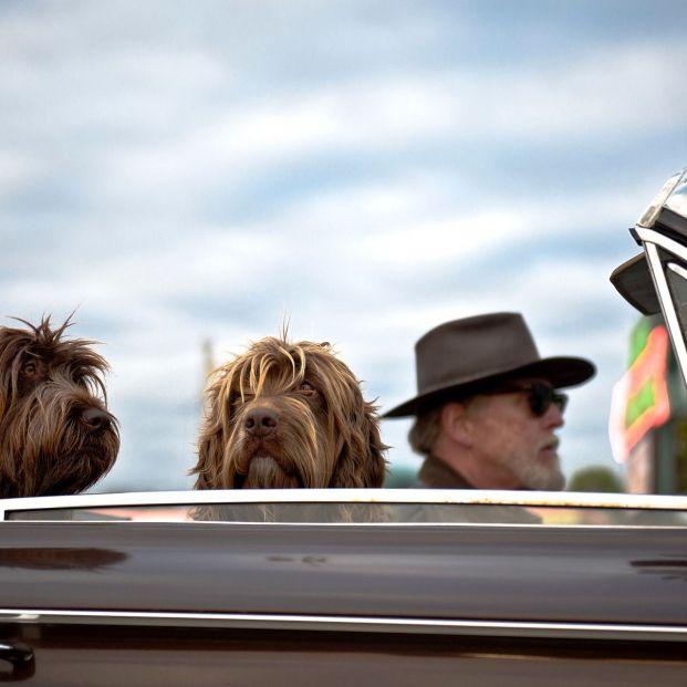 Hay una raza de perro adaptada para cada persona mayor