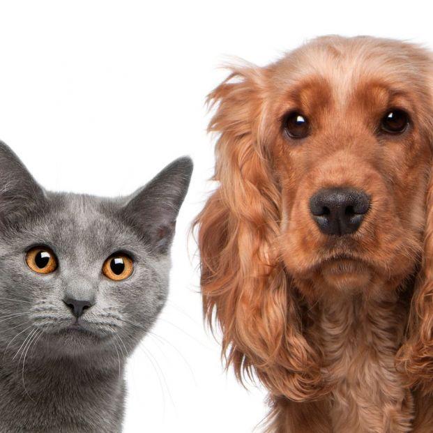 10 motivos por los que es mejor tener un gato que un perro