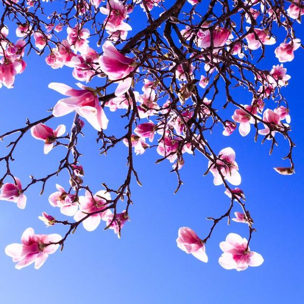 ¿Cuándo llega la primavera este año? ¿Cómo se decide cada año? (Bigstock)