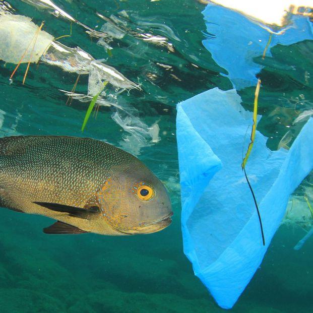 mercurio en el pescado por la contaminación en mares y océanos