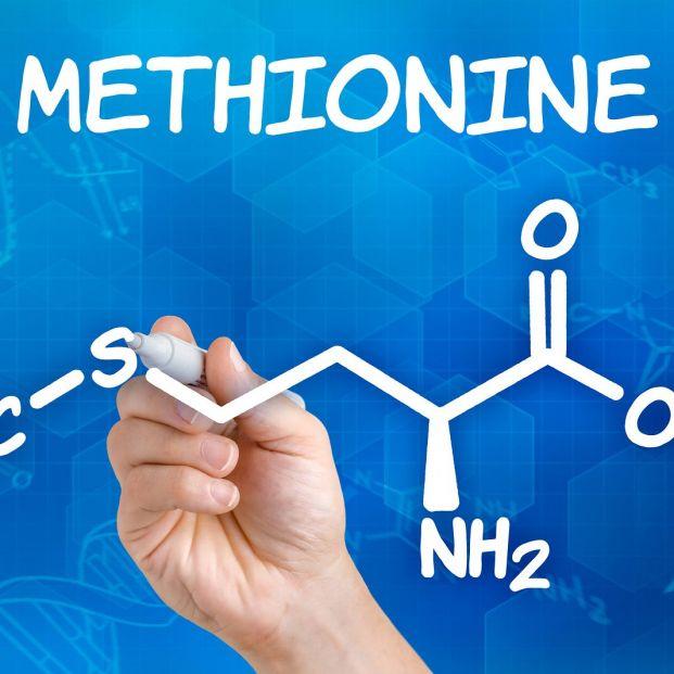 La metionina, un aminoácido esencial con elementos positivos y negativos para la salud de los mayores