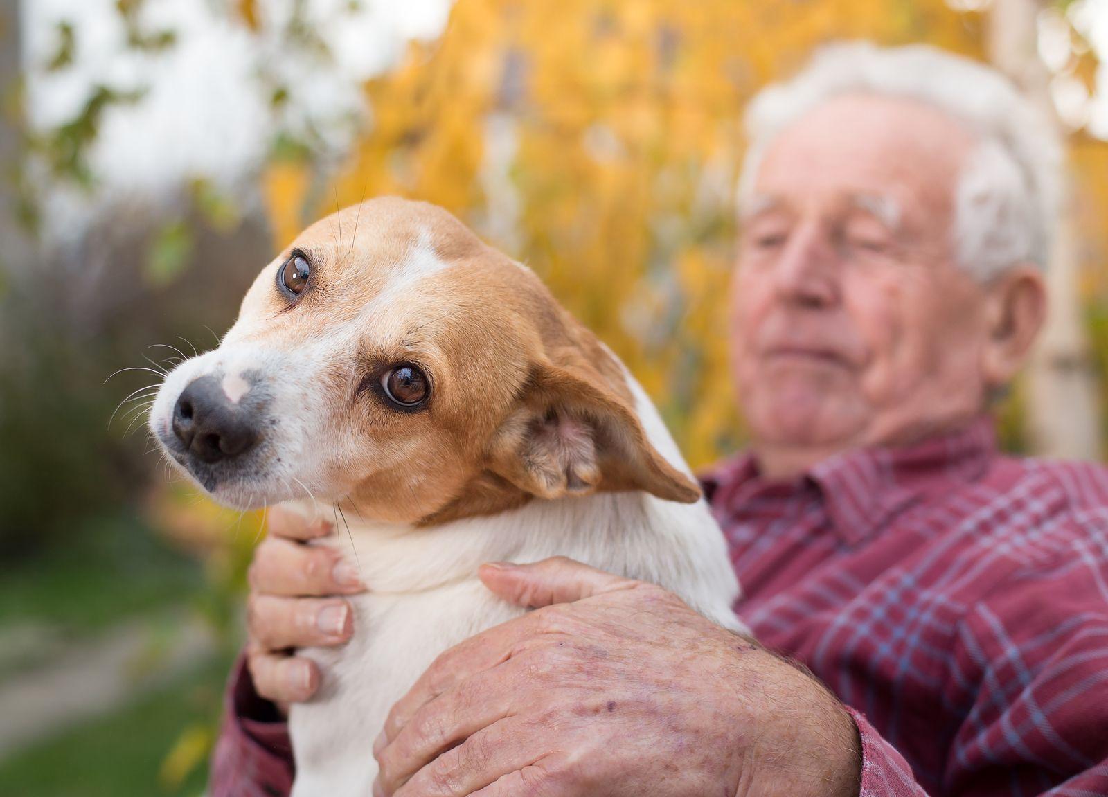 Perros detectarían coronavirus y harían más fácil el salir de la cuarentena