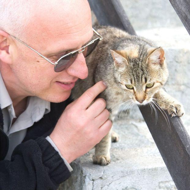 Qué razas de gatos provocan menos alergias (bigstock)