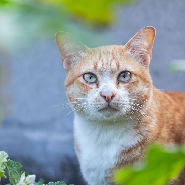 Todas las cosas que (quizá) no conocías sobre tu gato