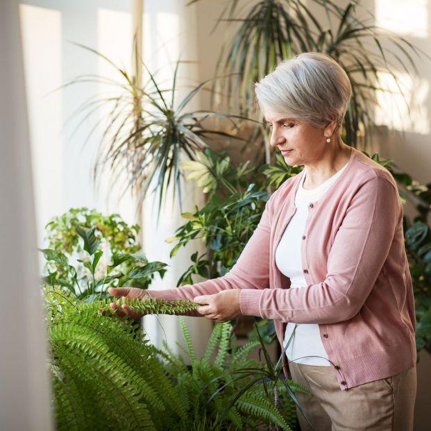 Dispositivos para crear un jardín inteligente en casa