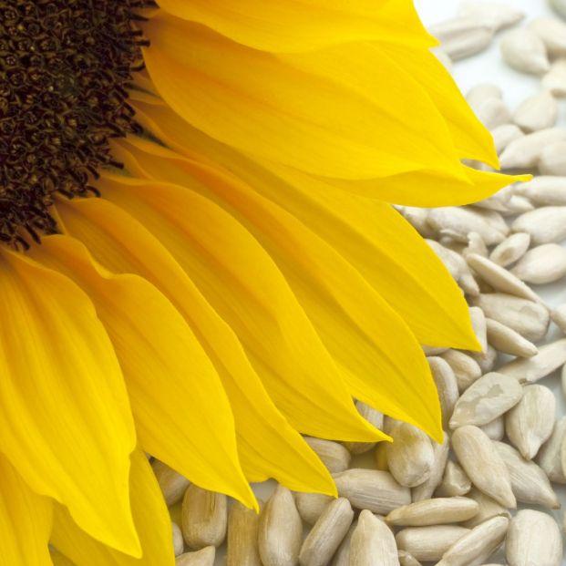 Las pipas de girasol, un fruto seco rico en vitamina E y antioxidantes (Bigstock)